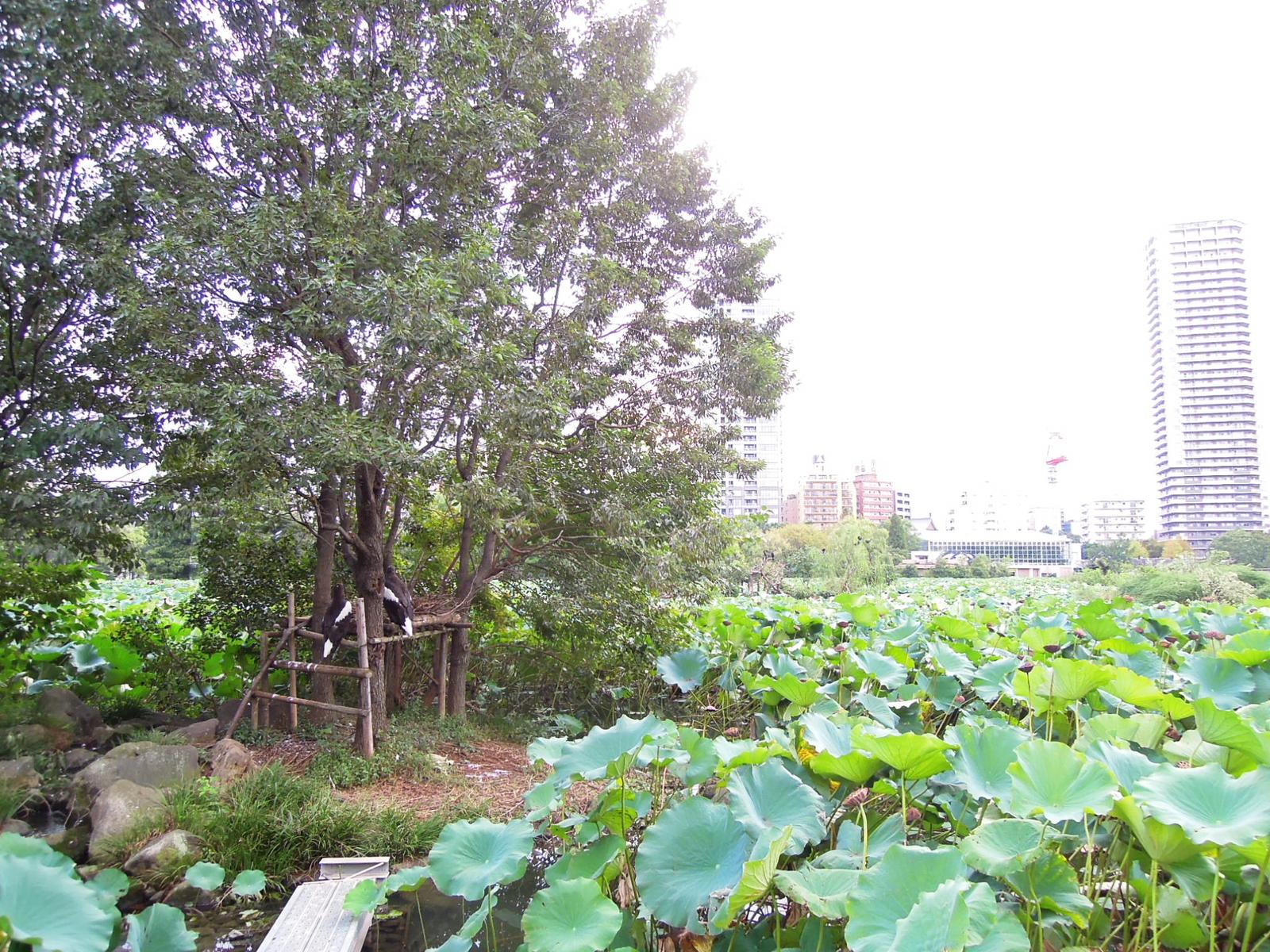 2011_09290950086